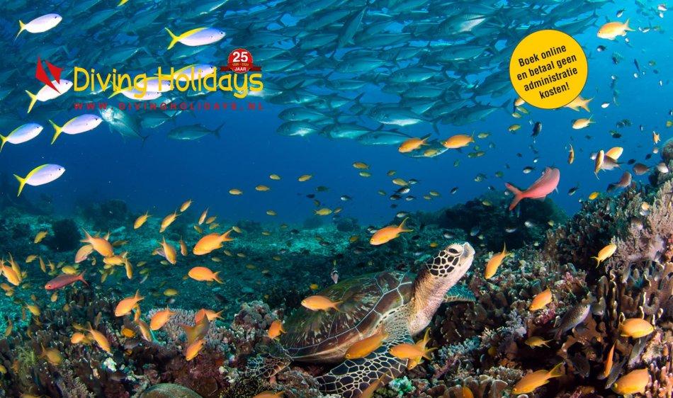 DH Caroussel Filipijnen duiken