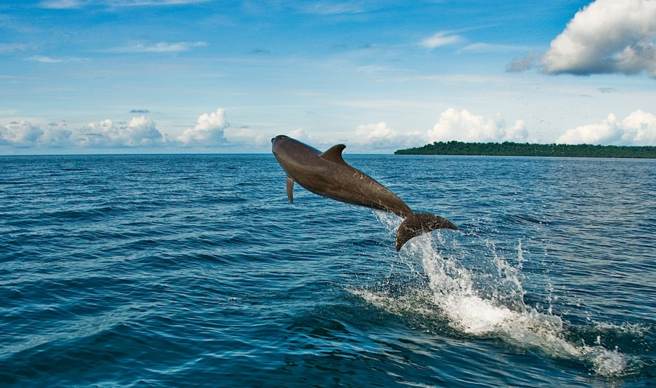 Borneo Kalimantan - Diving Holidays