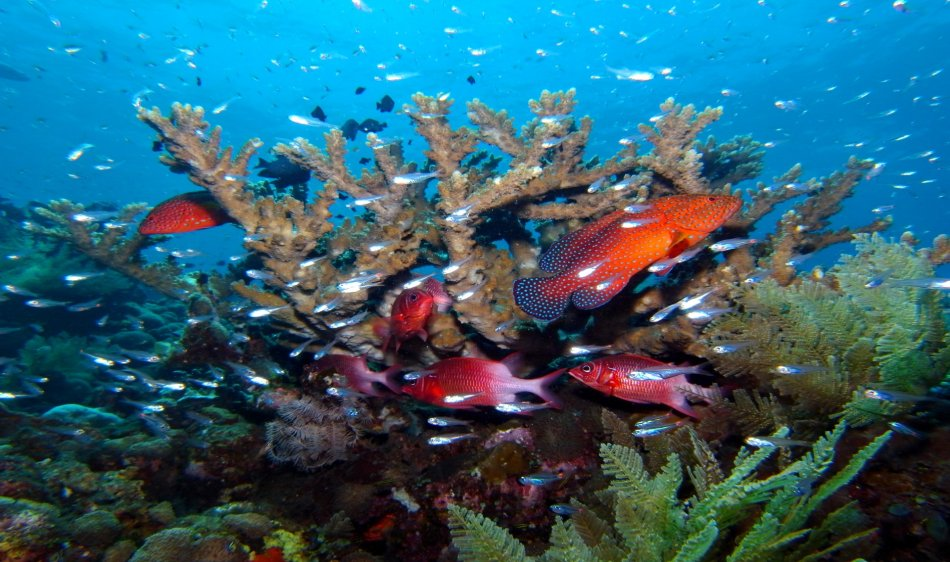 Best of Bali Divesafari - Diving Holidays