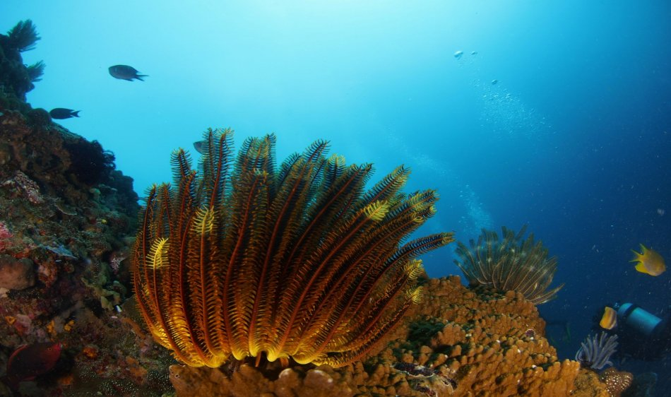 Duikrondreis Bali - Diving Holidays