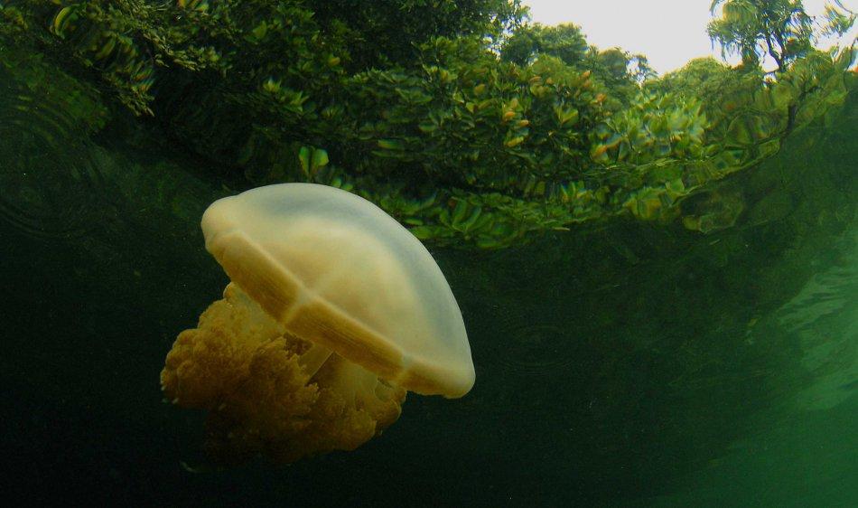 Maratua Paradise Resort - Diving Holidays
