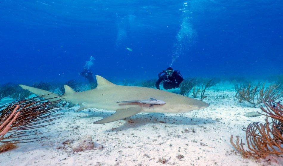 Bahama Liveaboards - Diving Holidays