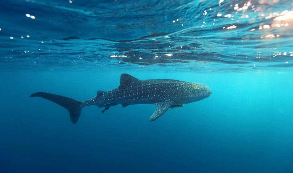 Mexico - Diving Holidays