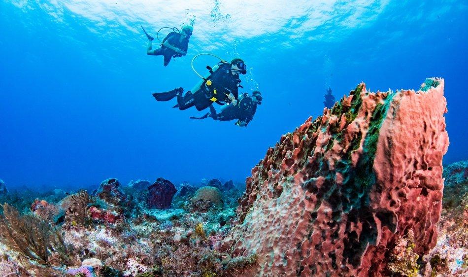 Yucatan - Diving Holidays