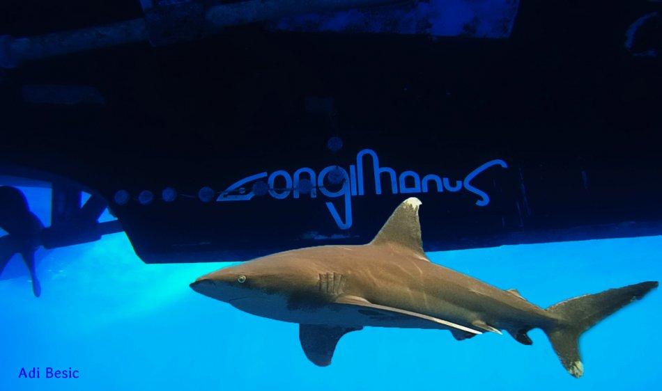 Longimanus - Diving Holidays