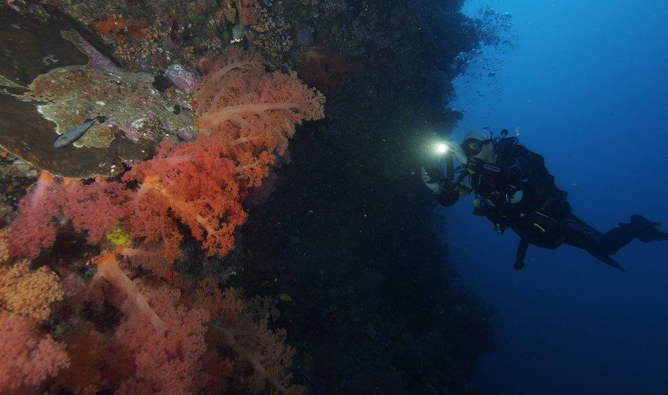 Liveaboards - Diving Holidays