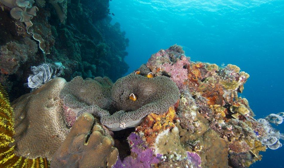 Onderwater Anda - Bohol, Filipijnen