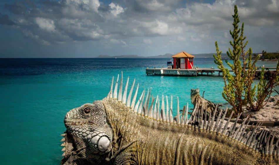 Captain Don's Habitat - Diving Holidays