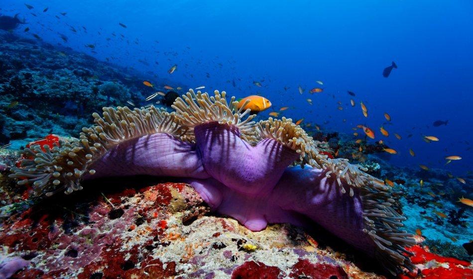Filitheyo Island Resort - Diving Holidays