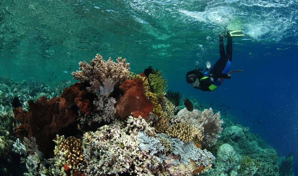 Bunaken Divers Seabreeze Resort - Diving Holidays