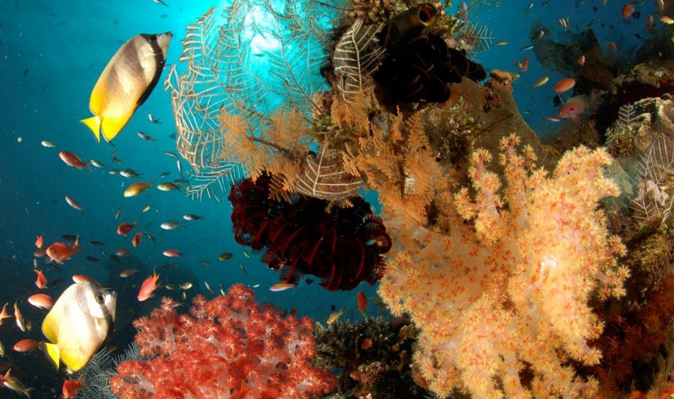 Kubu Indah Dive & Spa Resort - Diving Holidays