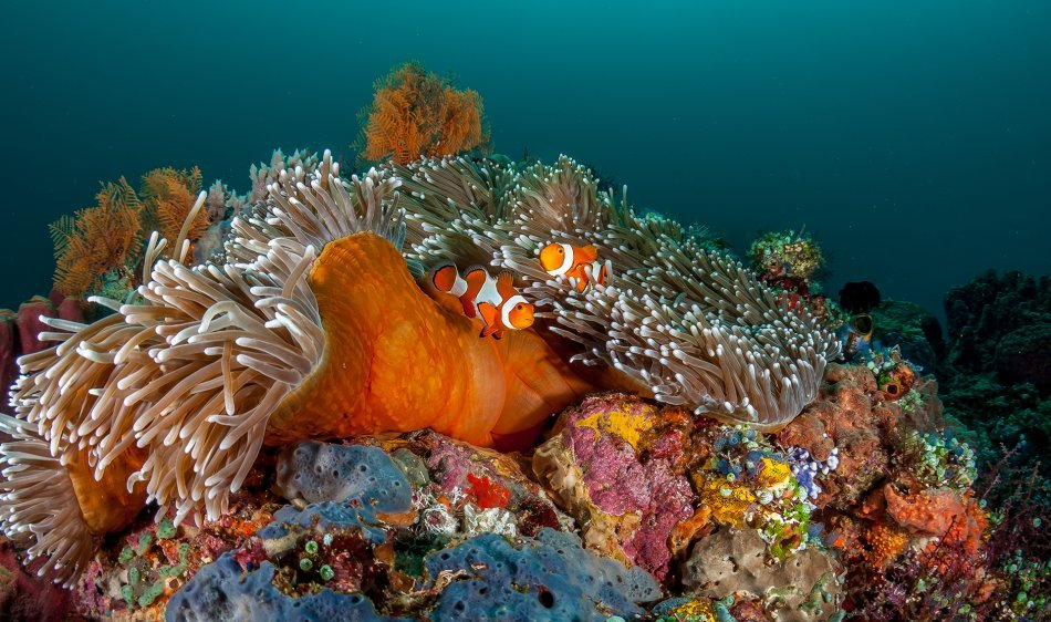Molukken - Diving Holidays